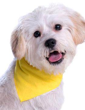 <b>Doggie Bandana</b>